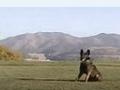 狗狗大小便 拉布拉多犬怎么驯养 (45播放)