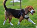 适合与狗狗一起做的运动有哪些