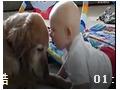 小宝宝和金毛说话,笑死了!! (462播放)
