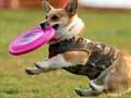 小狗狗怎么训练 (8)