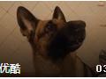 最搞笑狗狗视频合集 赶走烦恼 哈哈哈 (222播放)