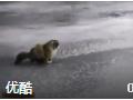 猫咪狗狗冰面打滑搞笑集锦 (650播放)