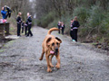 小狗混进马拉松比赛跑完21公里